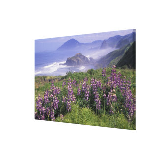 USA, Oregon, Nesika Beach. Lupine and Oregon Canvas Print