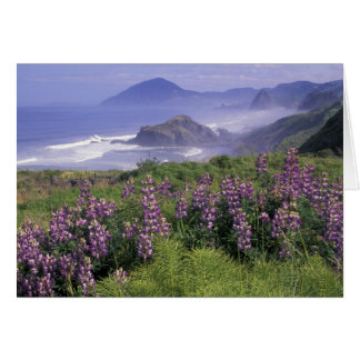 USA, Oregon, Nesika Beach. Lupine and Oregon Card