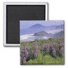 USA, Oregon, Nesika Beach. Lupine and Oregon Magnet