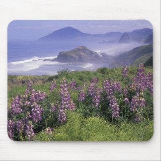 USA, Oregon, Nesika Beach. Lupine and Oregon Mouse Pad