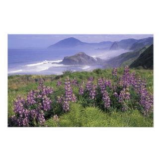 USA, Oregon, Nesika Beach. Lupine and Oregon Photo Print