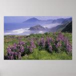 USA, Oregon, Nesika Beach. Lupine and Oregon Poster