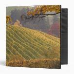 USA, Oregon, Newberg. Vineyard in the fall. Binder