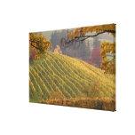 USA, Oregon, Newberg. Vineyard in the fall. Canvas Print