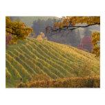 USA, Oregon, Newberg. Vineyard in the fall. Postcard