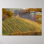 USA, Oregon, Newberg. Vineyard in the fall. Poster