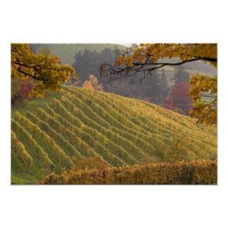 USA, Oregon, Newberg. Vineyard in the fall. Poster
