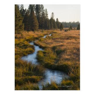 USA, Oregon, Paulina Creek Postcard