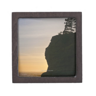 USA, Oregon, Pine tree on top of cliff at sunset Jewelry Box