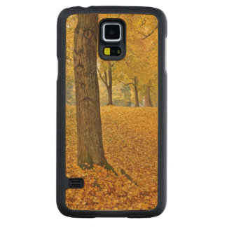 USA, Oregon, Portland. American Linden Trees Carved Maple Galaxy S5 Slim Case