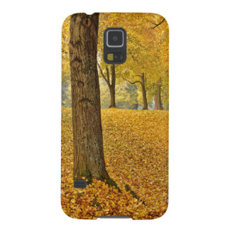 USA, Oregon, Portland. American Linden Trees Galaxy S5 Cover