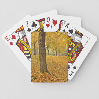 USA, Oregon, Portland. American Linden Trees Playing Cards