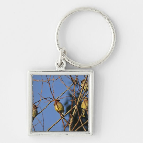 USA, Oregon, Portland. Cedar waxwing on tree Keychain