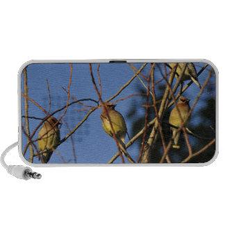 USA, Oregon, Portland. Cedar waxwing on tree iPhone Speaker