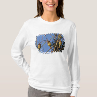 USA, Oregon, Portland. Cedar waxwing on tree T-Shirt