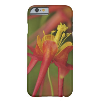 USA, Oregon, Portland. Close-up of columbine Barely There iPhone 6 Case