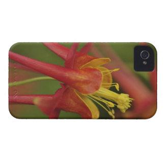 USA, Oregon, Portland. Close-up of columbine Case-Mate iPhone 4 Case