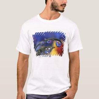 USA, Oregon, Portland, Close-up of ladybird T-Shirt