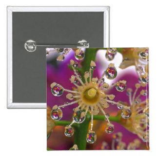 USA, Oregon, Portland. Cosmos flowers reflect in Button