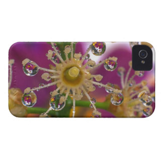 USA, Oregon, Portland. Cosmos flowers reflect in iPhone 4 Covers