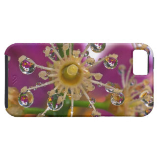 USA, Oregon, Portland. Cosmos flowers reflect in iPhone SE/5/5s Case