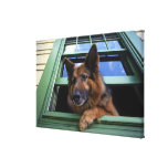 USA, Oregon, Portland. Griff the long-hair Canvas Prints