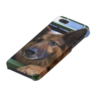 USA, Oregon, Portland. Griff the long-hair iPhone 5 Covers