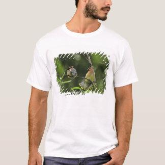 USA, Oregon, Portland. Male cedar waxwing T-Shirt