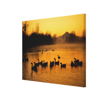 USA, Oregon, Portland. Waterfowl in Columbia Stretched Canvas Print
