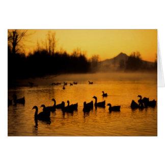 USA, Oregon, Portland. Waterfowl in Columbia Card