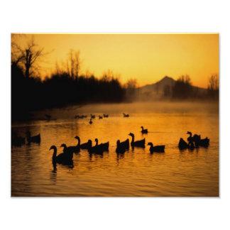 USA, Oregon, Portland. Waterfowl in Columbia Photo Print