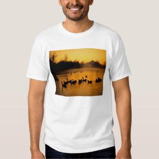 USA, Oregon, Portland. Waterfowl in Columbia T Shirt