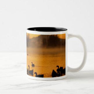USA, Oregon, Portland. Waterfowl in Columbia Two-Tone Coffee Mug