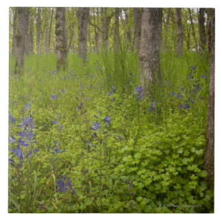 USA, Oregon, Salem, Wildflowers among oak trees Ceramic Tile