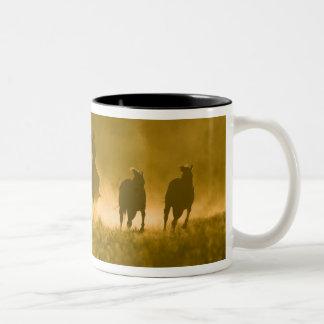 USA Oregon Seneca Ponderosa Ranch 3 Coffee Mugs