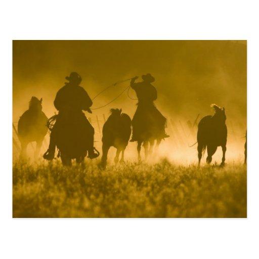 USA, Oregon, Seneca, Ponderosa Ranch. 3 Post Card