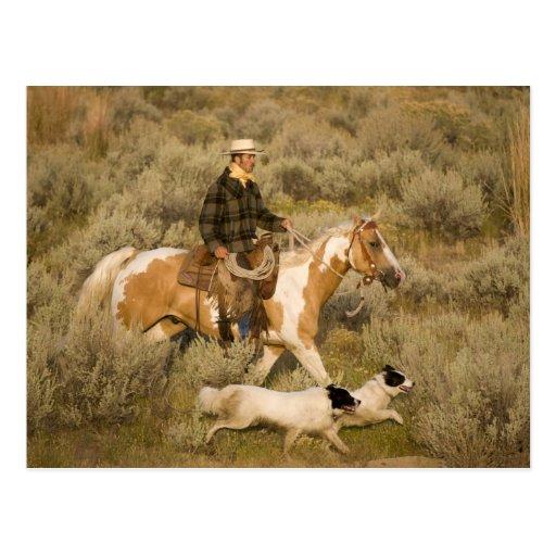 USA, Oregon, Seneca, Ponderosa Ranch. A cowboy Post Cards
