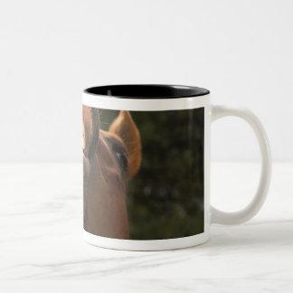 USA Oregon Seneca Ponderosa Ranch A horse Mugs