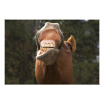 USA, Oregon, Seneca, Ponderosa Ranch. A horse Photo Art