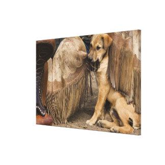 USA, Oregon, Seneca, Ponderosa Ranch. A puppy Canvas Print
