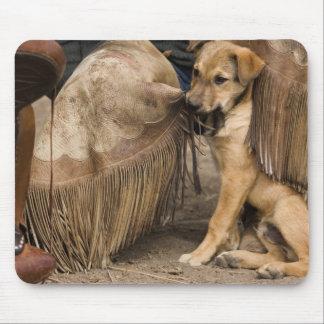 USA, Oregon, Seneca, Ponderosa Ranch. A puppy Mouse Pad