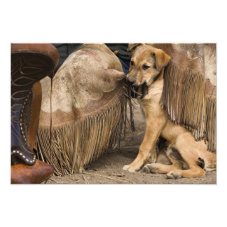 USA, Oregon, Seneca, Ponderosa Ranch. A puppy Photo Print