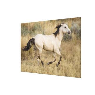 USA, Oregon, Seneca, Ponderosa Ranch. Horse Canvas Print
