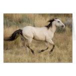 USA, Oregon, Seneca, Ponderosa Ranch. Horse Card