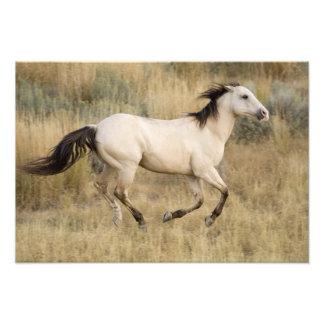USA, Oregon, Seneca, Ponderosa Ranch. Horse Photo Print