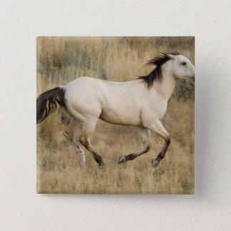 USA, Oregon, Seneca, Ponderosa Ranch. Horse Pinback Button