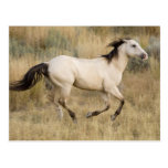 USA, Oregon, Seneca, Ponderosa Ranch. Horse Postcard