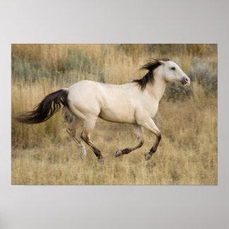 USA, Oregon, Seneca, Ponderosa Ranch. Horse Poster