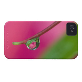 USA, Oregon, Shore Acres Gardens, Water droplet iPhone 4 Case-Mate Cases