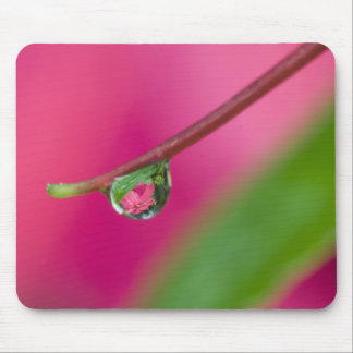 USA, Oregon, Shore Acres Gardens, Water droplet Mouse Pad